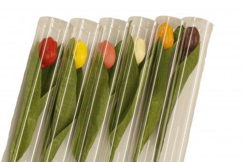 2460 Hollandse tulpen 6 kleuren in luxe koker